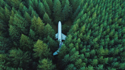 Abandoned Aircraft in Green Pine Forest