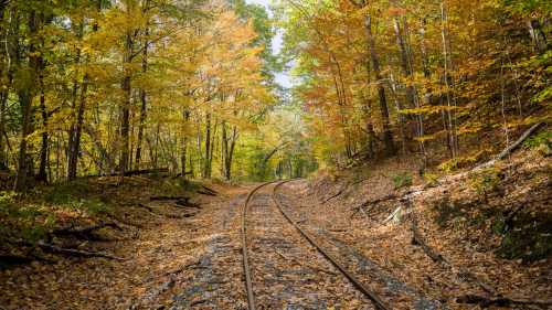 Abandoned Rails in Autumn Forest
