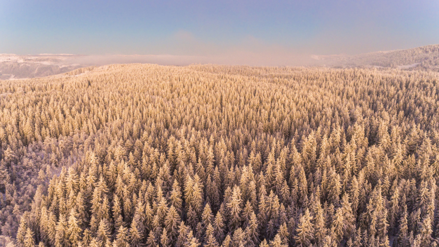 Amazing Winter Snow Covered Forest