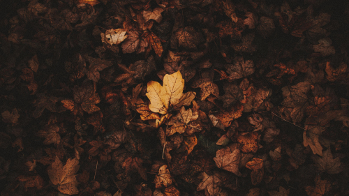 Autumn Fallen Leaves on Ground