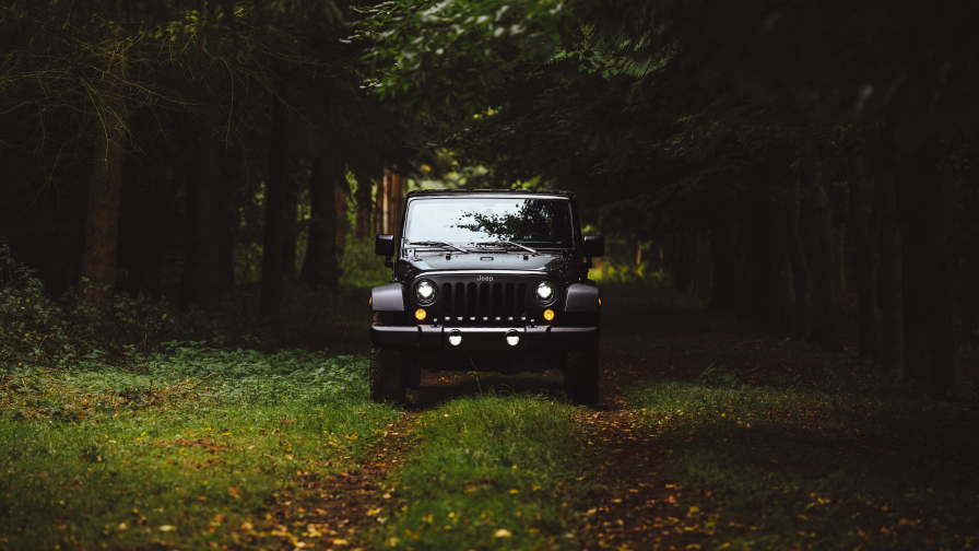 Beautiful big JEEP in green forest