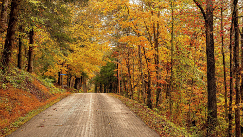 Beautiful Concrete Road in Autumn Forest