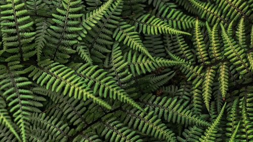 Beautiful Green Fern Macro