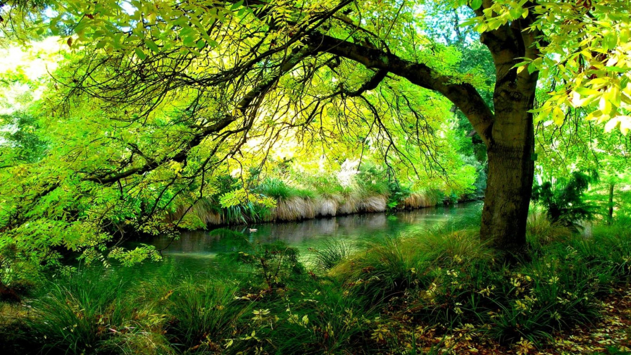 Beautiful Green Forest and River
