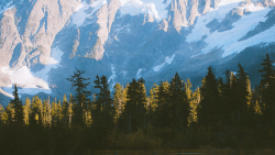 Beautiful Mountains and Pine Green Forest