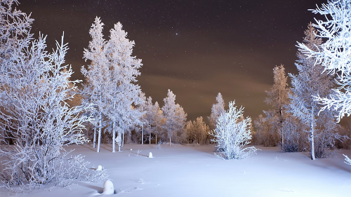 Beautiful Night in Winter Pine Forest