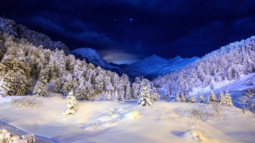 Beautiful Night Winter Forest