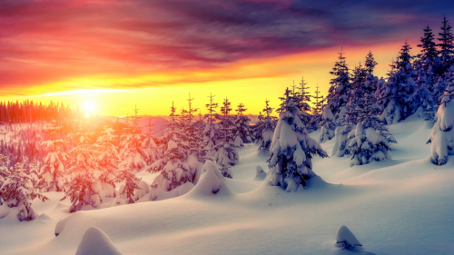 Beautiful Orange Sunset in Snowy Pine Forest