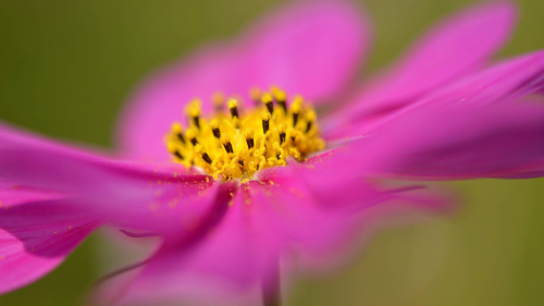 Beautiful Pink Flower Macro