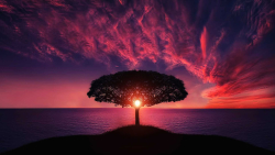 Beautiful Pink Sunset and Single Tree