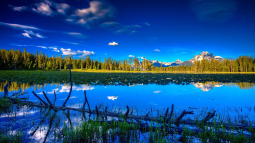 Beautiful Pure Lake and Green Pine Forest in Valley