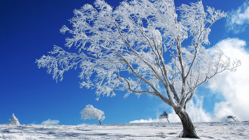 Beautiful Single Frozen Tree