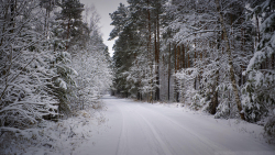 Beautiful Snowy Forest and Road