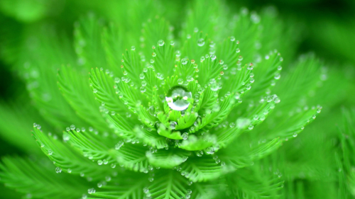 Beautiful Water Droplets on Green Leaves