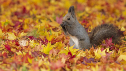 Cute Squirrel on Yellow Dry Leaves