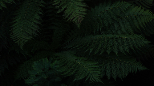 Fern Macro and Darkness