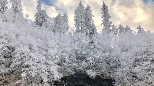 Frosty Trees and Old Bridge