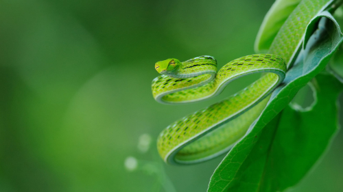 Green Snake on Leaves in Blur