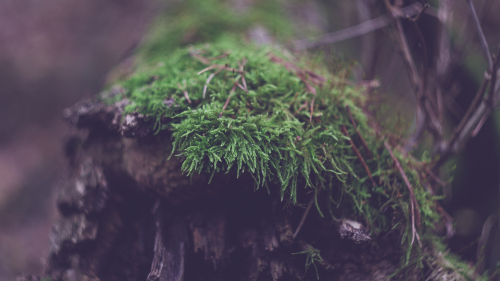 Moss on the Wood