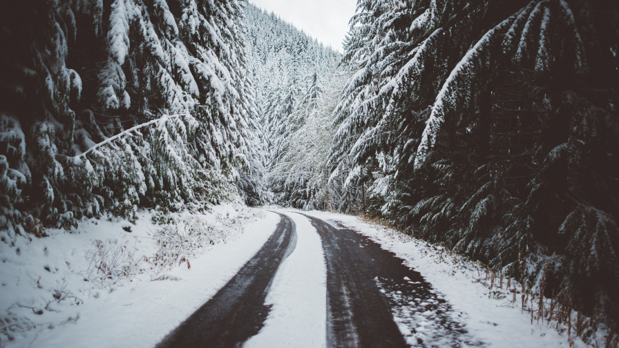 Mountain forest road and snow