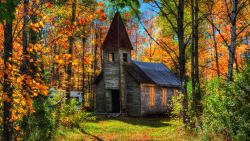 Old Wood Abandoned House in Autumn Forest