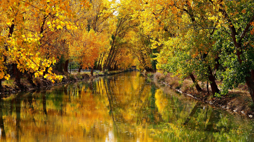 River between Yellow Autumn Trees