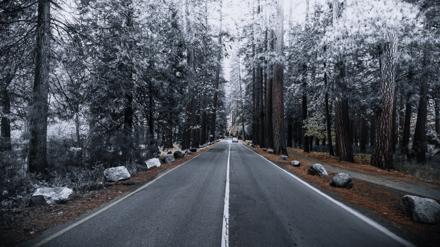 Road in Beautiful Frosty Forest