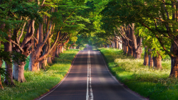 Road in Beautiful Summer Green Forest