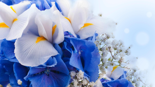 White and Blue Flowers