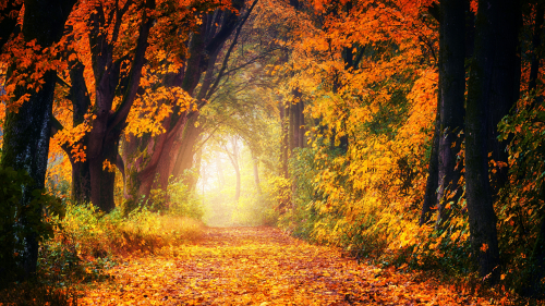Wonderful Autumn Forest and Daylight