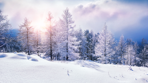Wonderful Snowed Winter Forest and Sunset