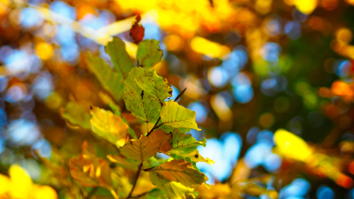 Yellow Leaves on Tree and Sunlight