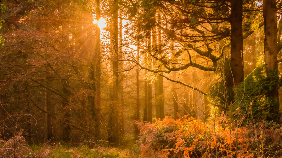 Amazing Autumn Forest and Sunlight