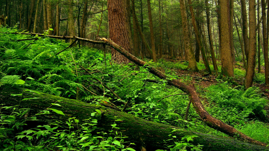 Beautiful Old Green Forest