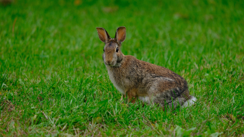 Funny Rabbit on Green Grass