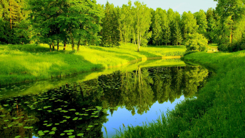 Lake Between Green Grass Covered Forest