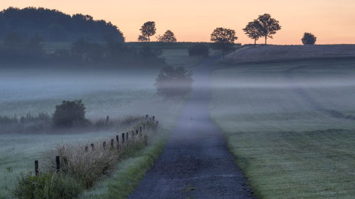 Mist on Field and Road