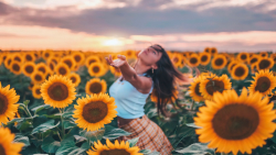 Pretty Young Girl in Sunflowers