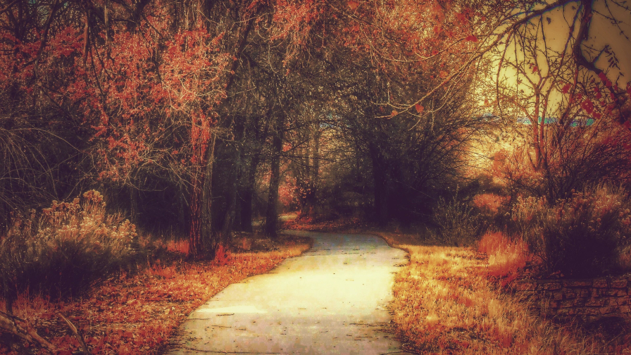 Road in Old Autumn Forest