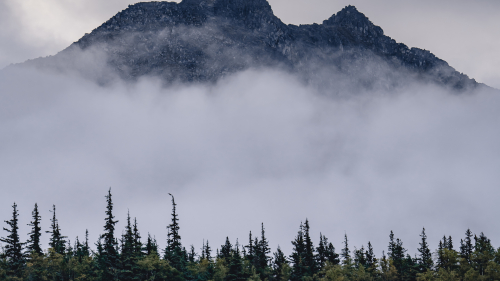 Spruce and Fir Forest and Mist in Mountains