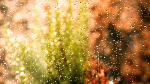 Water Drops on Glass and Grass in Garden